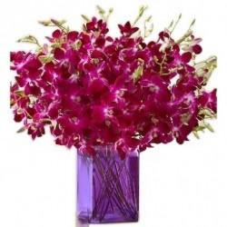 Orchid Jumbo