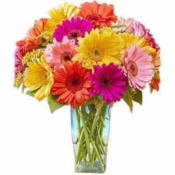 Buy Gerbera Flowers Online