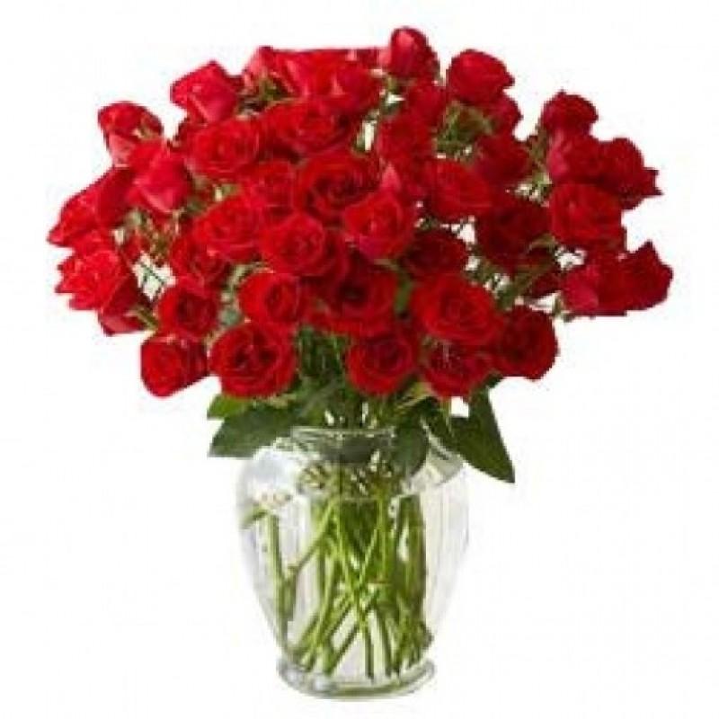 Kisses of 50 Roses