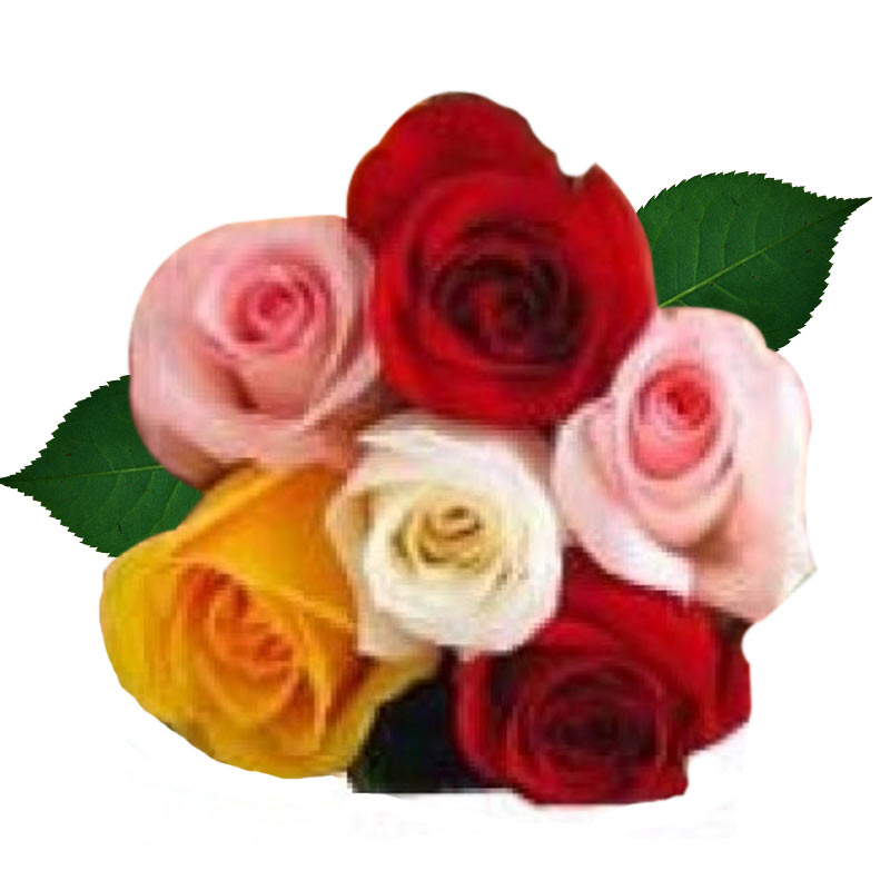 6 Colorful Roses