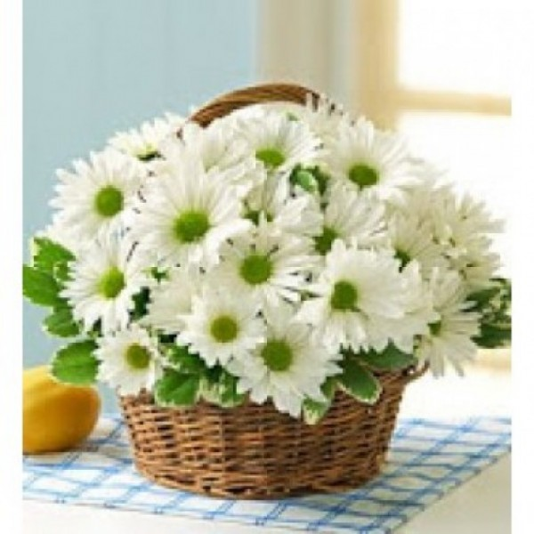Blooming Daisy Basket