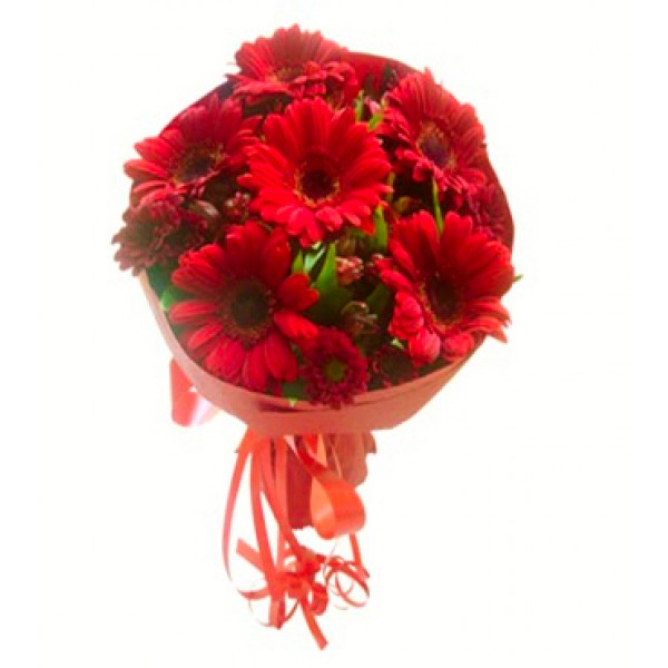 6 Red Gerberas with Paper Packing