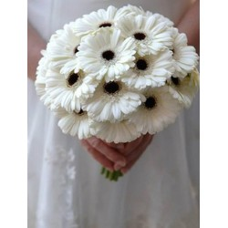 12 White Gerberas