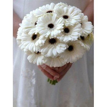 12 White Gerberas Bunch