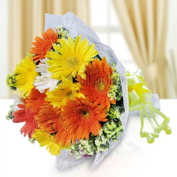 12 Gerberas wrapped in Cellophane Paper