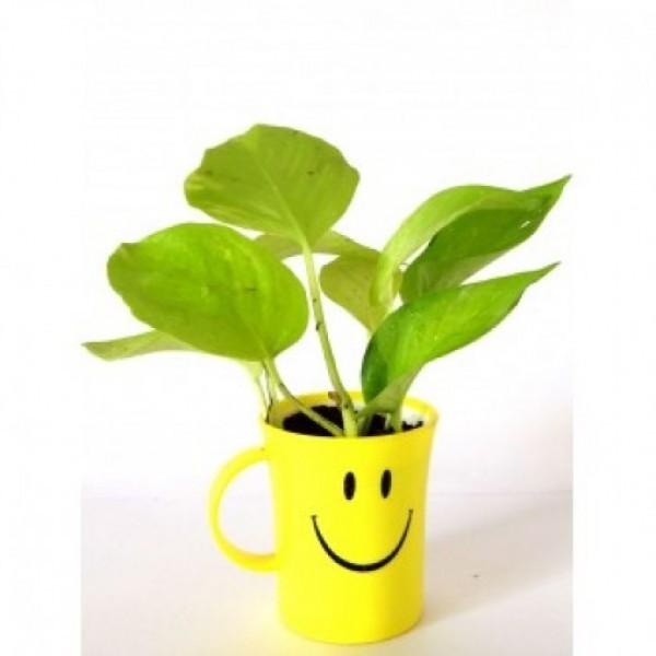 Golden Pothos in Smiley Cup