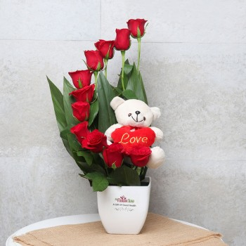 12 Red Roses Teddy Arrangement in White Plastic Pot