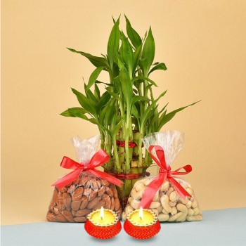 Almonds (100 gms) and Cashew Nuts (100 gms) with 2 Layer Lucky Bamboo Plant and Set of 2 Diya