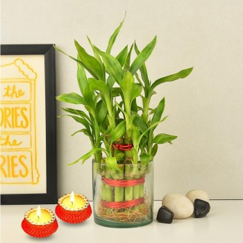 1 Two Layer Lucky Bamboo Plant with Set of 2 Diya