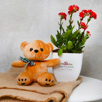 One Red Kalanchoe Plant in White Plastic Pot with Teddy Bear 6 inches