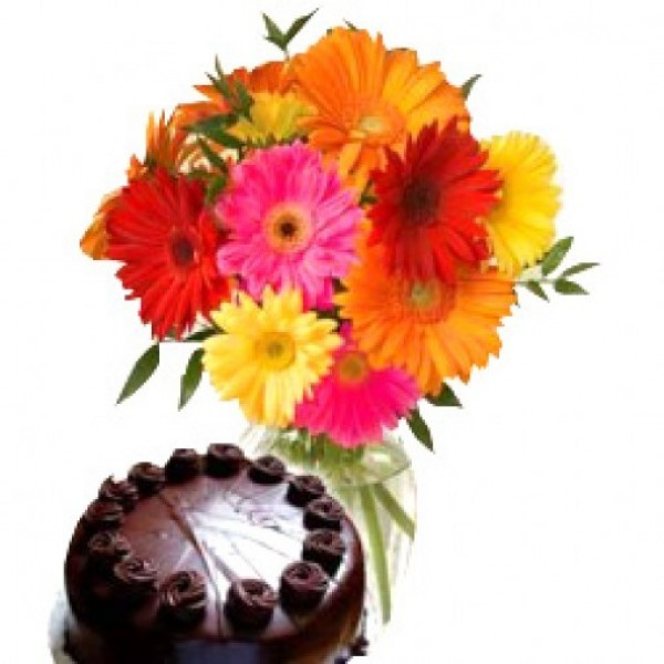 12 Assorted Gerberas with Chocolate Cake (Half Kg)