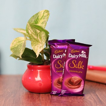 2 Dairy Milk Silk Chocolate (65 gm) with One White Pothos Plant in Red Round Pot