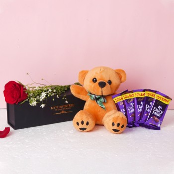 One Red Rose in Black Signature Box with 5 Dairy Milk Chocolate (13.2 gm) and One Brown Teddy Bear