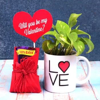 One White Handle Mug with Money Plant and 2 Dairy Milk Chocolate for Valentines Day