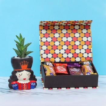 Aloe Vera Cactus Plant with Chocolate Box