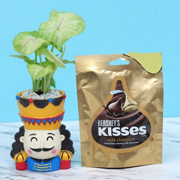 Syngonium Plant with Chocolate Pouch