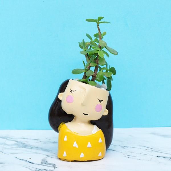 Jade Plant in Designer Pot