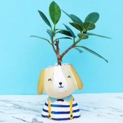 Cute Desk Plant