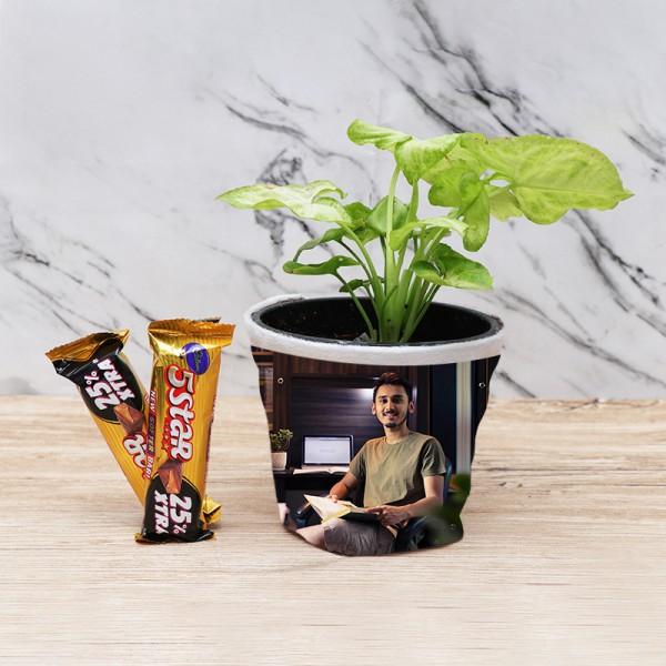 Syngonium Plant in Personalised Pot