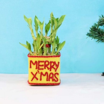 Plants for Christmas
