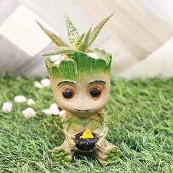 Aloe Groot Plant