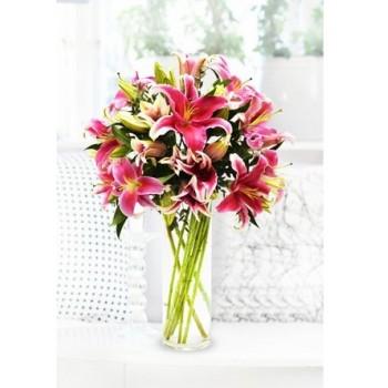 Pink Stargazer Lily