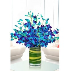 Captivating Blue Orchids