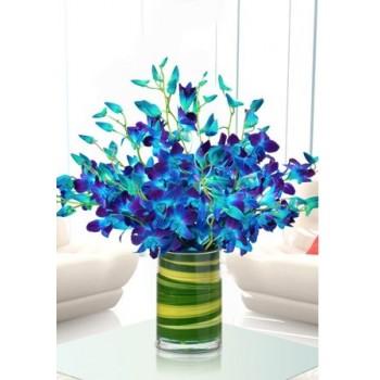 Captivating Blue Orchids