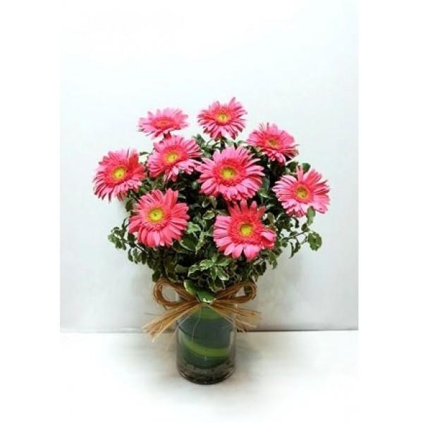 Beauty Of Pink Gerbera