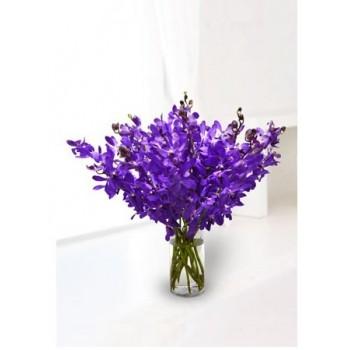 Tantalizing Purple Mokara Orchids