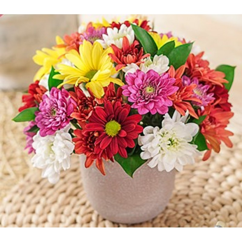 Mixed Daisies in a Pottery Vase Petite