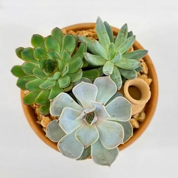 Assort Succulent Pot