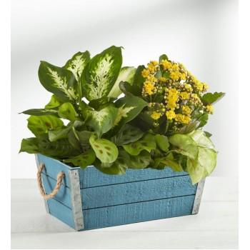 Plants Blooming Dish Garden