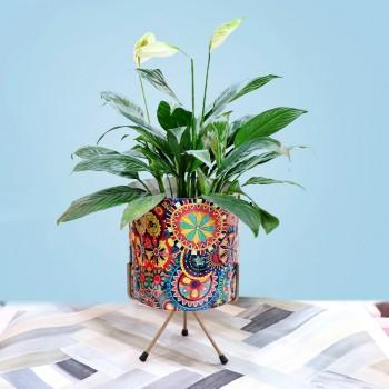 Peace Lily Multi Color Planter