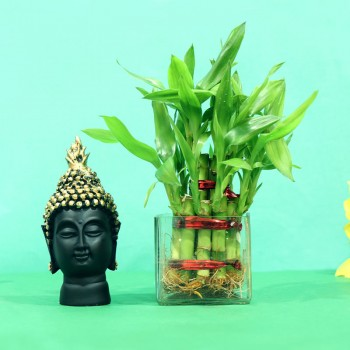 Golden Success Budha Combo