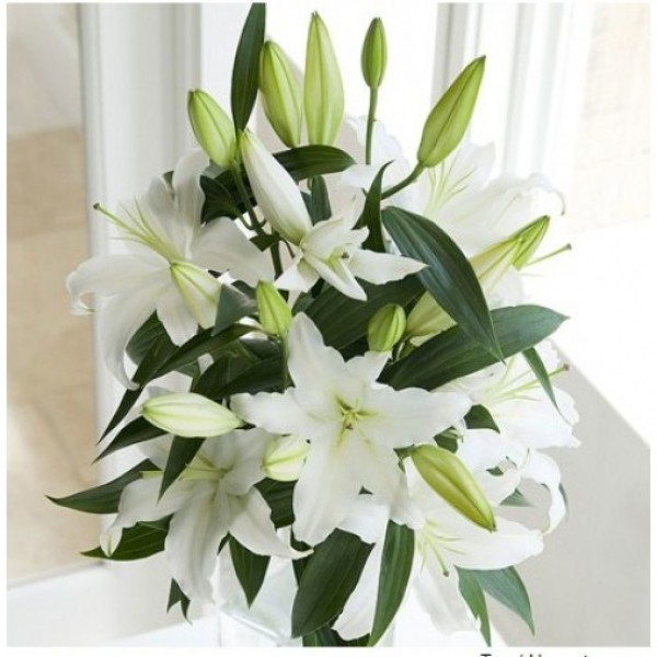 Simply White Oriental Lilies