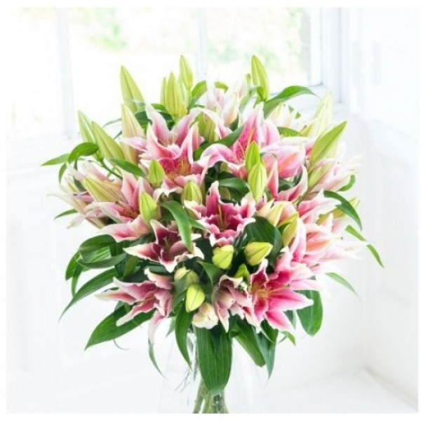 10 Pink Oriental Lily