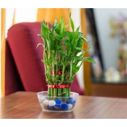 Online Green Plants Delivery