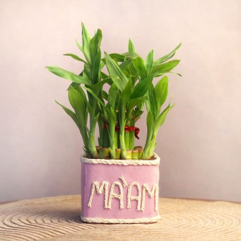"2 Layer Lucky Bamboo with ""Maam"" wriiten on it"
